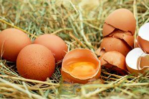 Jaja, ishrana prema organima, grudi, srce, kosti, materica, pluća, jajnici, mišići, mozak, stomak i želudac