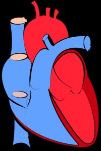 srce, srčani problemi, angina pektoris, tahikardija, aritmija
